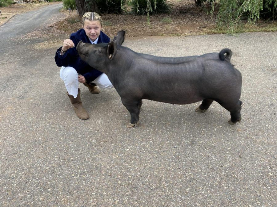 Poway FFA Chapter Discusses Livestock Raising Changes